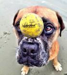 Waboba Fetch - Hundboll
